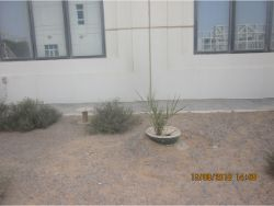 56 Date palm planting in Dubai with the Waterboxx plant cocoon replacing irrigation