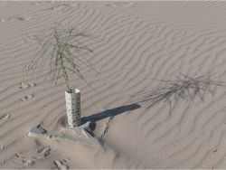 61 Growboxx plant cocoon w Mezquite Prosopis glandula and Palo Verde Parkinsonia aculeata at Pronatura Mexicali 50C 90 less water use 90 survival rate 1