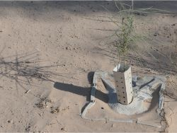 63 Growboxx plant cocoon w Mezquite Prosopis glandula and Palo Verde Parkinsonia aculeata at Pronatura Mexicali 50C 90 less water use 90 survival rate 11